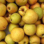 Apple, public domain (US Dep. of agriculture)