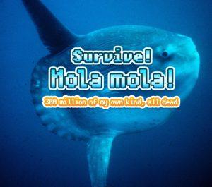mola_mola