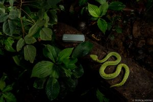 Snakes and a nanopore.