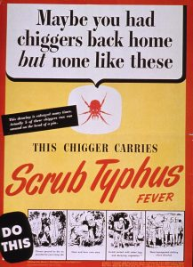 trombidid mite: chiggers