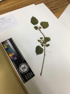 Botanical Garden Genomes