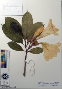 Digital botancal garden: a herbarium example