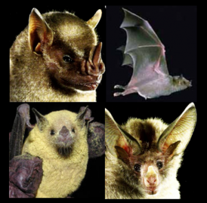 bat genomics examples